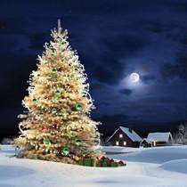 Поздравляем Вас с Новым 2014 годом и Рождеством Христовым!